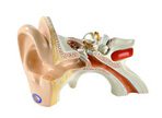 Your Ears, Your Music, Your Hearing