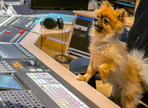 Making the best of other's opinions of your mix