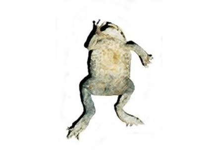Road Toad Music