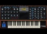 Moog Music Voyager Plug SE