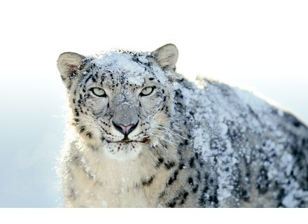 Apple OS X 10.6 Snow Leopard