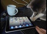 iggy investigates an ipad