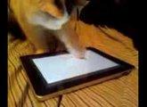 Ipad Cat 2