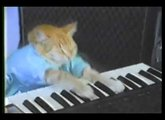 Keyboard Cat plays rock guitar (recorded with the RME Babyface)
