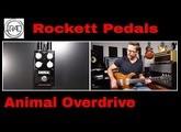 Rockett Pedals Animal OD Tour Series Quick Listen Demo Video by Shawn Tubbs