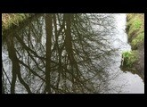Orange Wiggler - Shimmered Water ; Mutable Instruments Rings demo