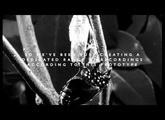 Spitfire Presents: Evo Grid #1 Strings Teaser