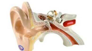 Interview de l'ORL Thierry Briche, O.R.L : tout sur vos oreilles, ou presque.