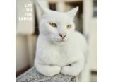 CAT ON THE LEDGE CHERCHE BATTEUR SUR NIORT