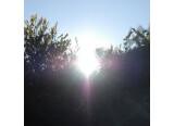 Sous le soleil levant