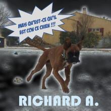 Richard A. - Mais qu'est-ce qu'il est con ce chien !