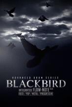 8dio Blackbird