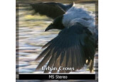 Detunized presents Urban Crows sound library