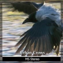 Detunized Urban Crows