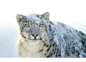 Apple OS X 10.6 Snow Leopard