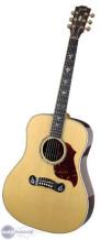 Gibson Dove